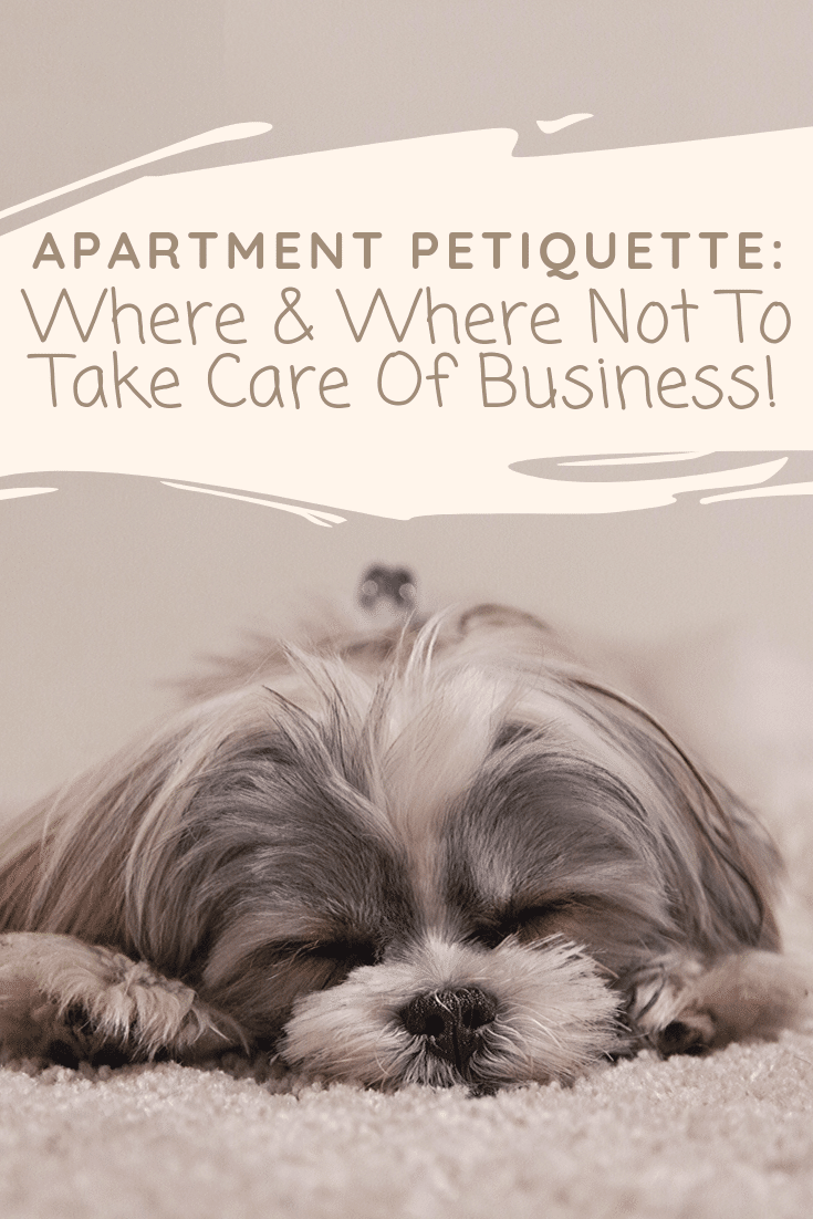 """Petiquette or pet etiquette, is a hot topic with the growing number of pets living in apartment communities. This week's petiquette guidelines will keep you from being """"that guy"""" or """"that gal."""" Today we're chatting about knowing where and where not to take care of business with your pets!"""