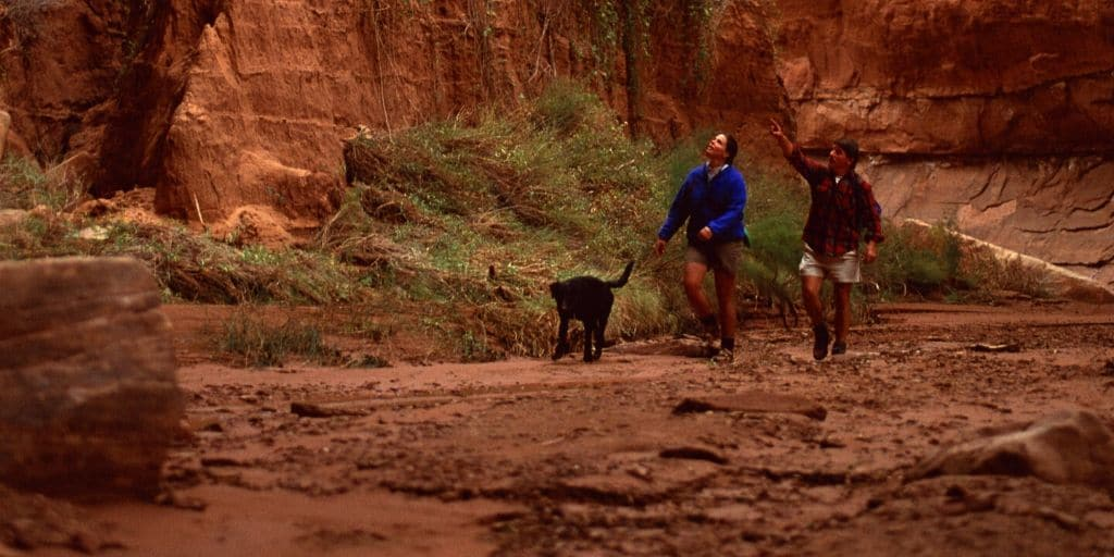 One of the great things about Phoenix living is the fact that there is so much fun outdoor activities to enjoy. These 10 Phoenix hikes are ones that you can take with your dog! Finding pet friendly activities is important for helping you and your dog stay active!